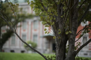 早朝に撮影した中之島公会堂そばの樹木