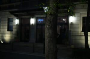 夜に撮影した、綿業会館のそばにある街路樹