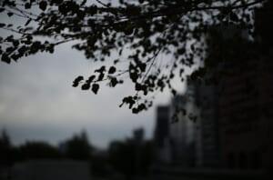 明け方の中之島で撮影した樹木