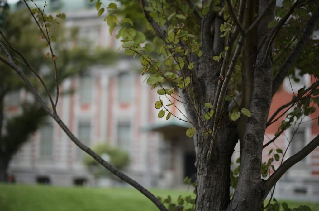 中之島公会堂の前で撮影した樹木