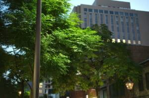 ライカで撮影した三休橋の街路樹