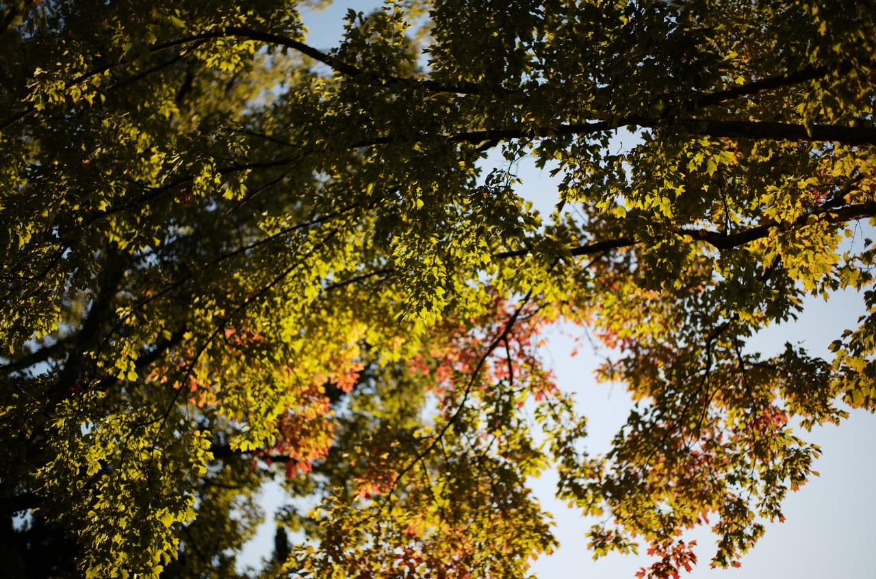 靭公園の紅葉