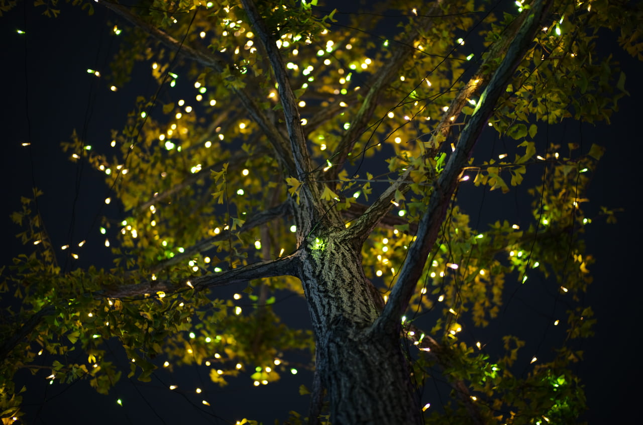 目を奪われるほど美しい夜の大木