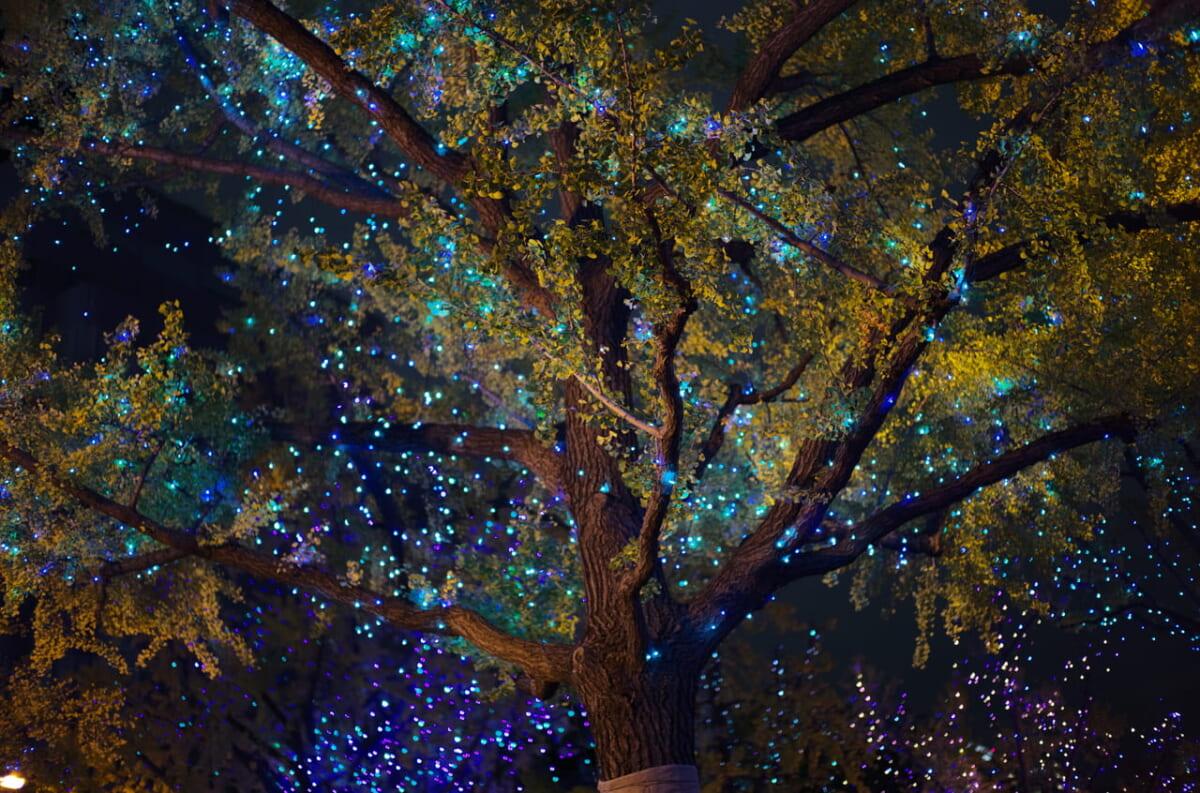 御堂筋のライトアップと、下から見上げた街路樹の写真