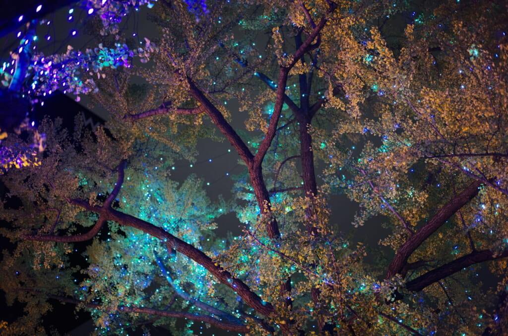御堂筋のライトアップと街路樹