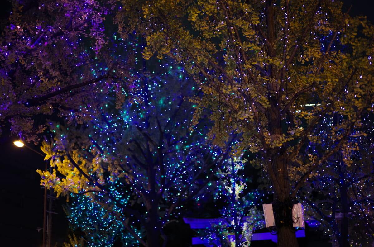 目を奪われるほど美しい御堂筋ライトアップと樹木