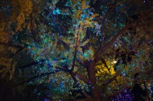 御堂筋ライトアップと、下から見上げた街路樹