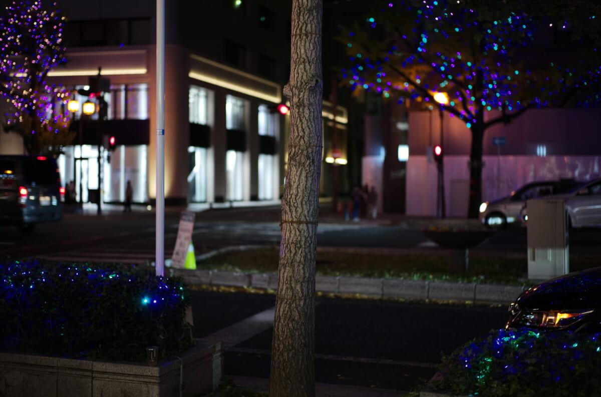 美しい御堂筋の樹木と夜景