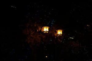 御堂筋の素敵なライトアップと街路樹
