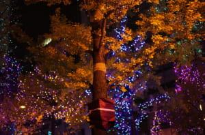 御堂筋の美しいライトアップと街路樹