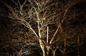 真冬の樹木