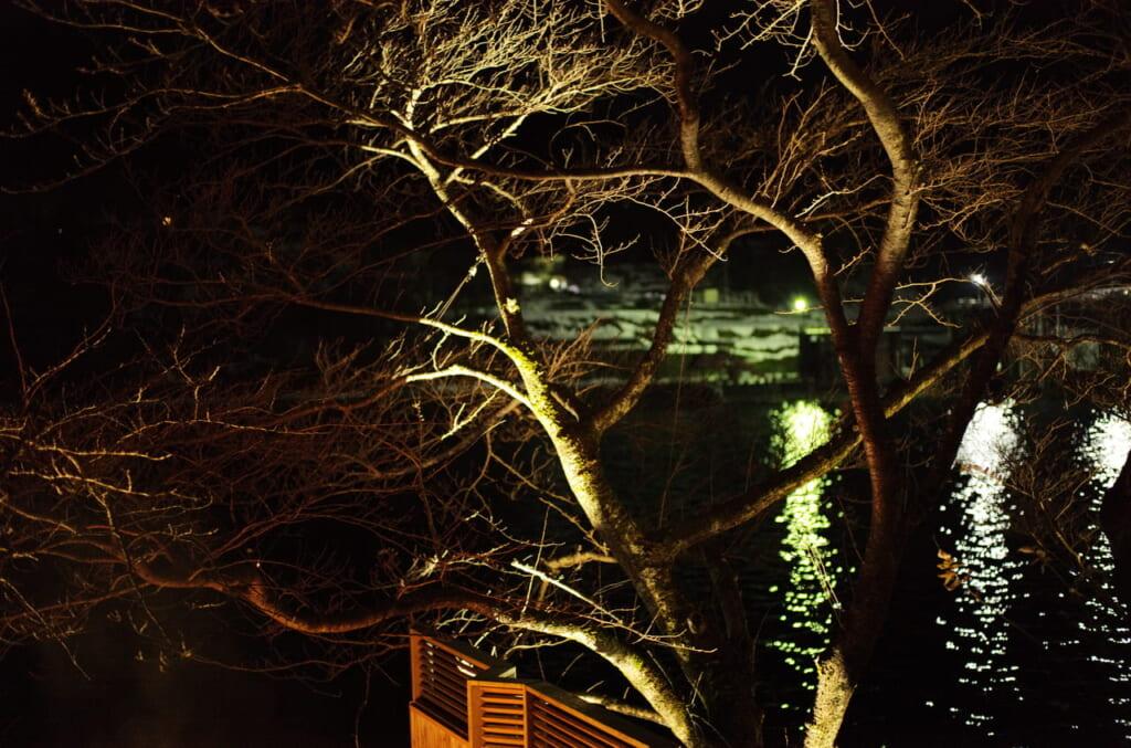 夜の神通川と樹木、そして水面