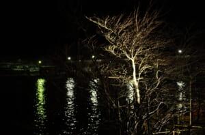 美しい神通川と樹木