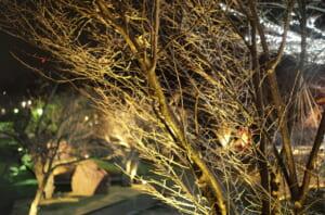 夜に撮影した樹木と湯けむり