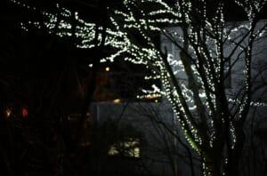 高級旅館のテラスにある、装飾された樹木