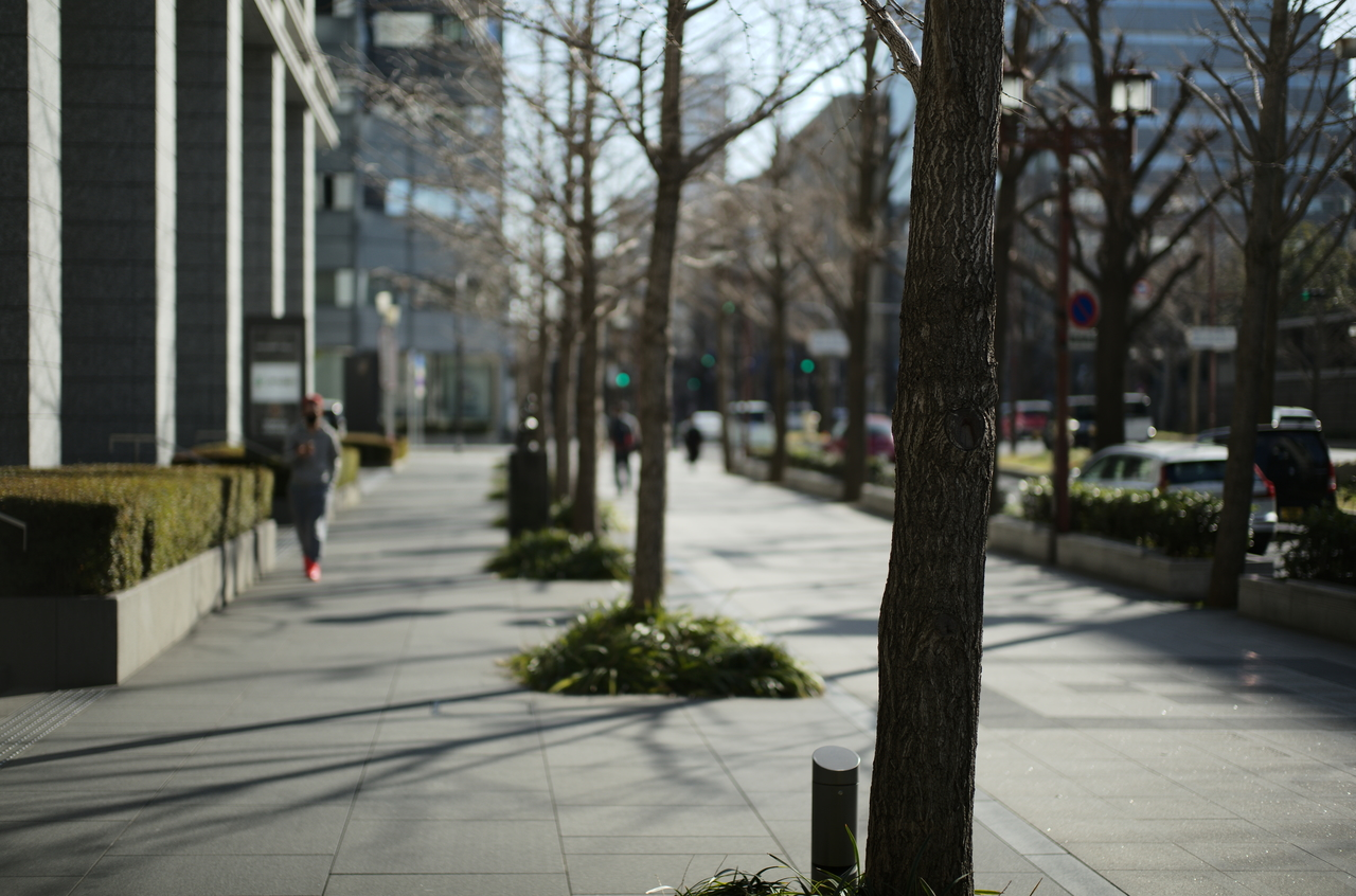 御堂筋の美しい街路樹とその様子