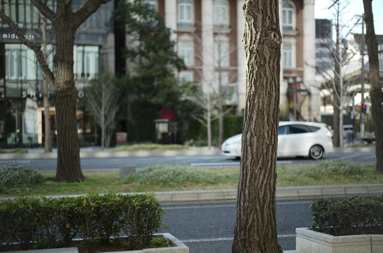 御堂筋の美しい街路樹と道路
