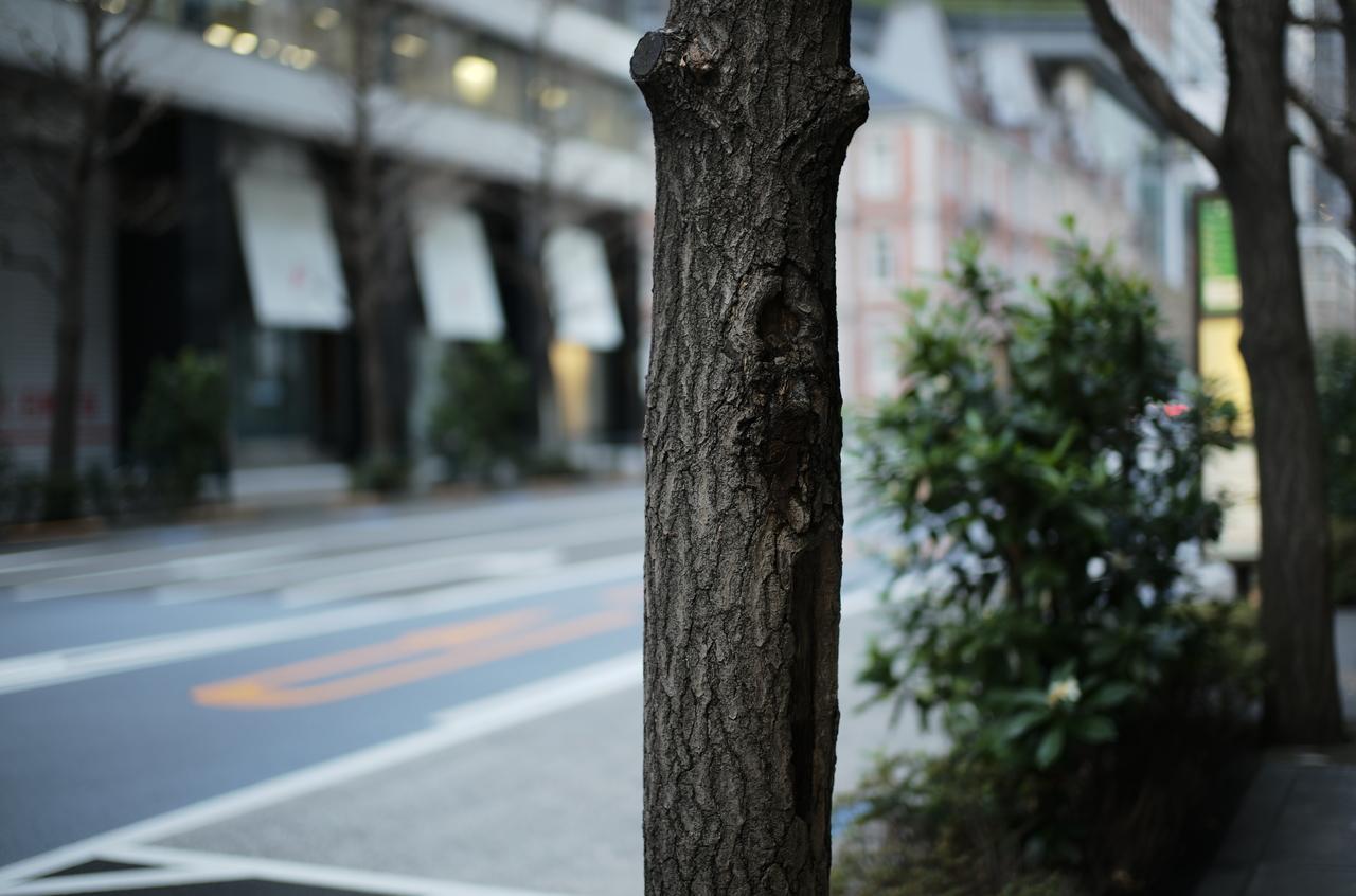 丸の内の道路と街路樹