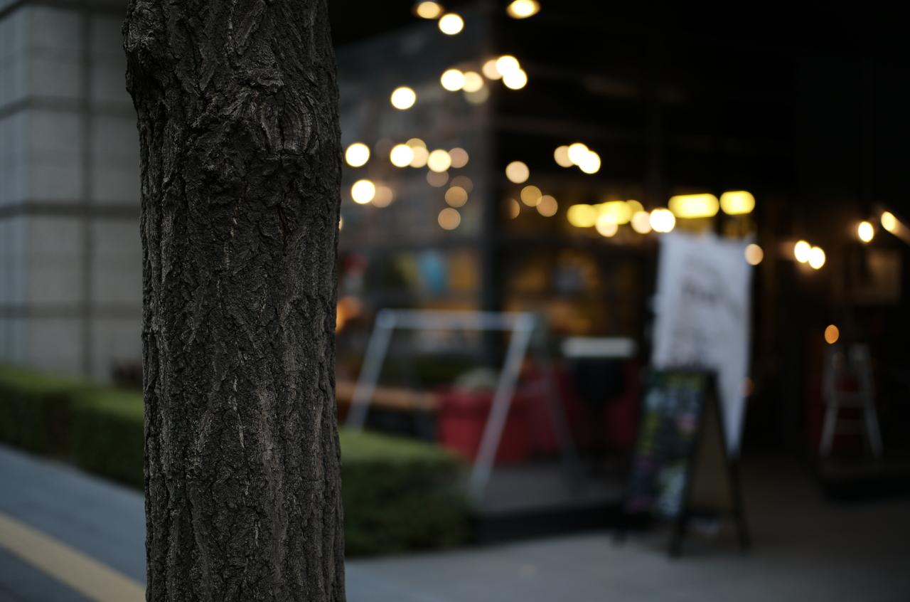 素敵な樹木とカフェの様子
