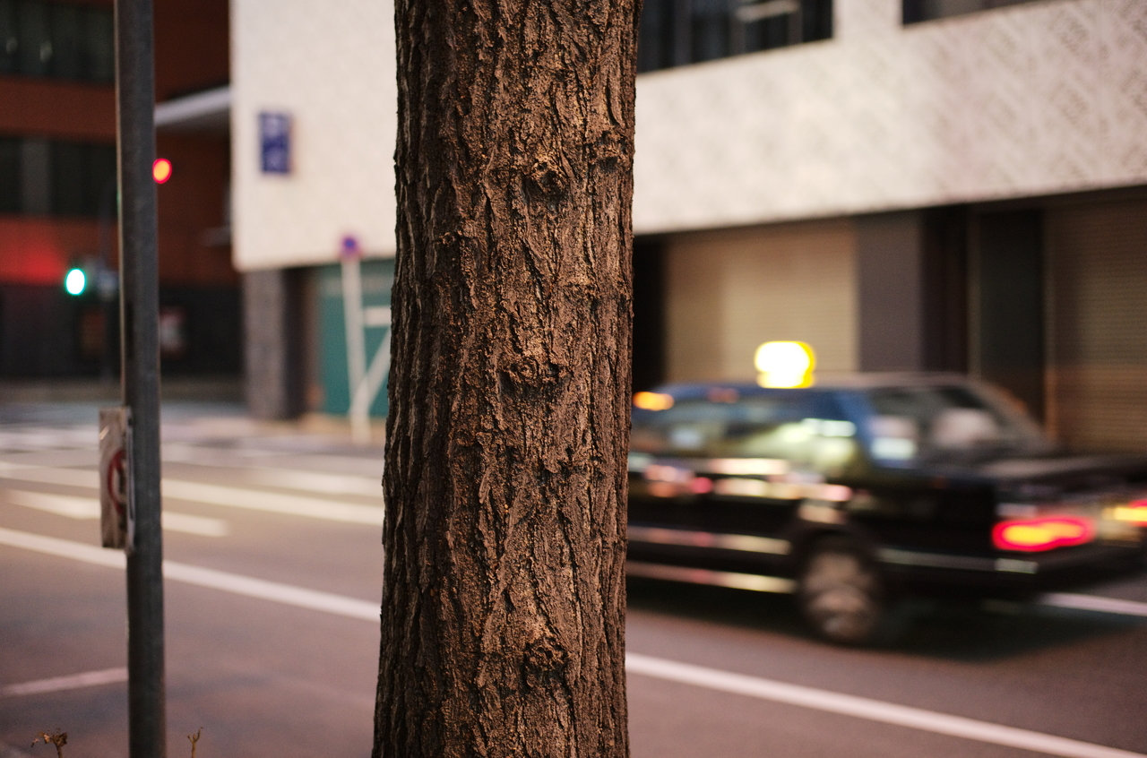 かっこいい街路樹