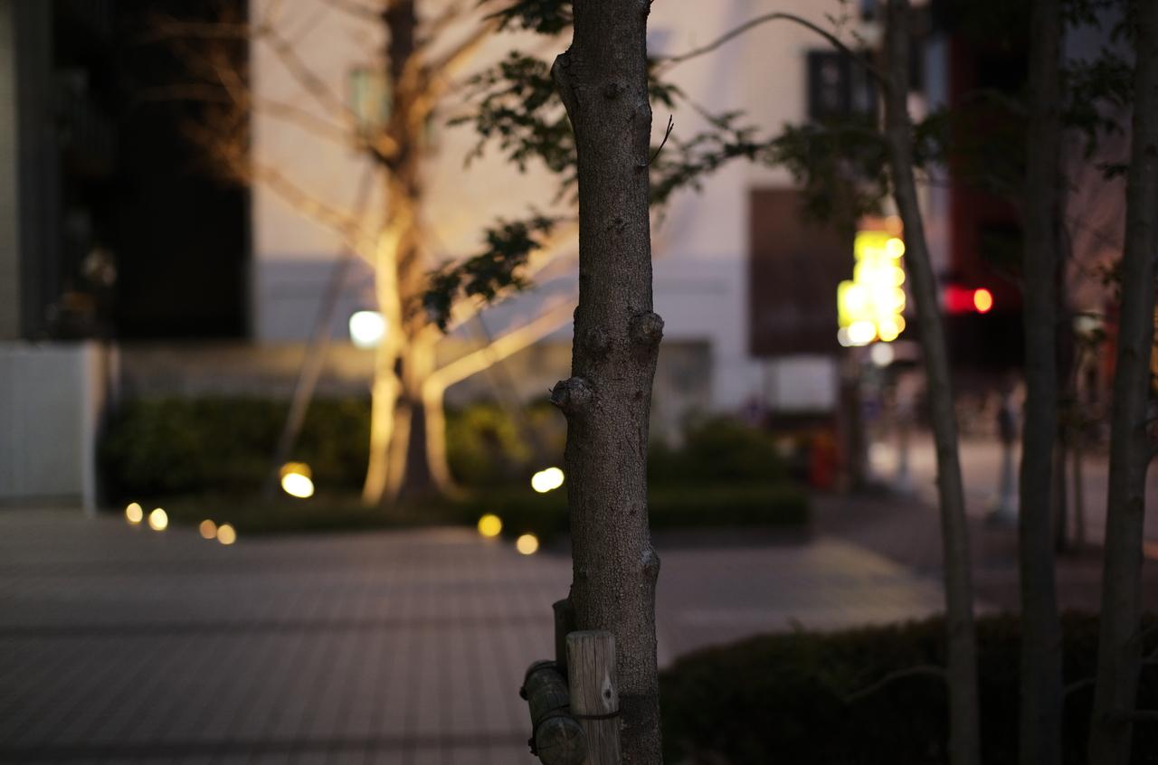素敵な街路樹と道路の景色
