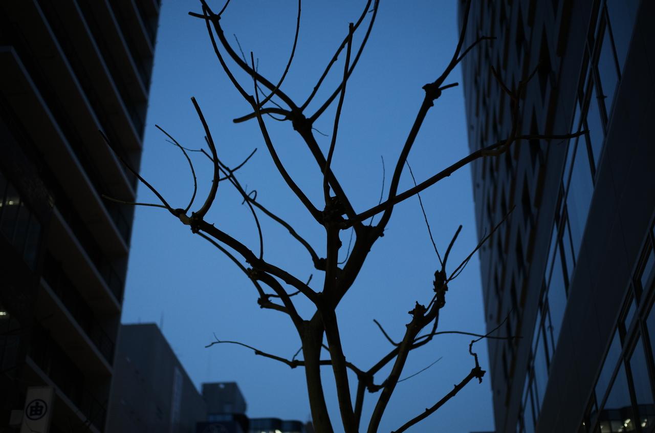 生命力を感じる樹木と夜景