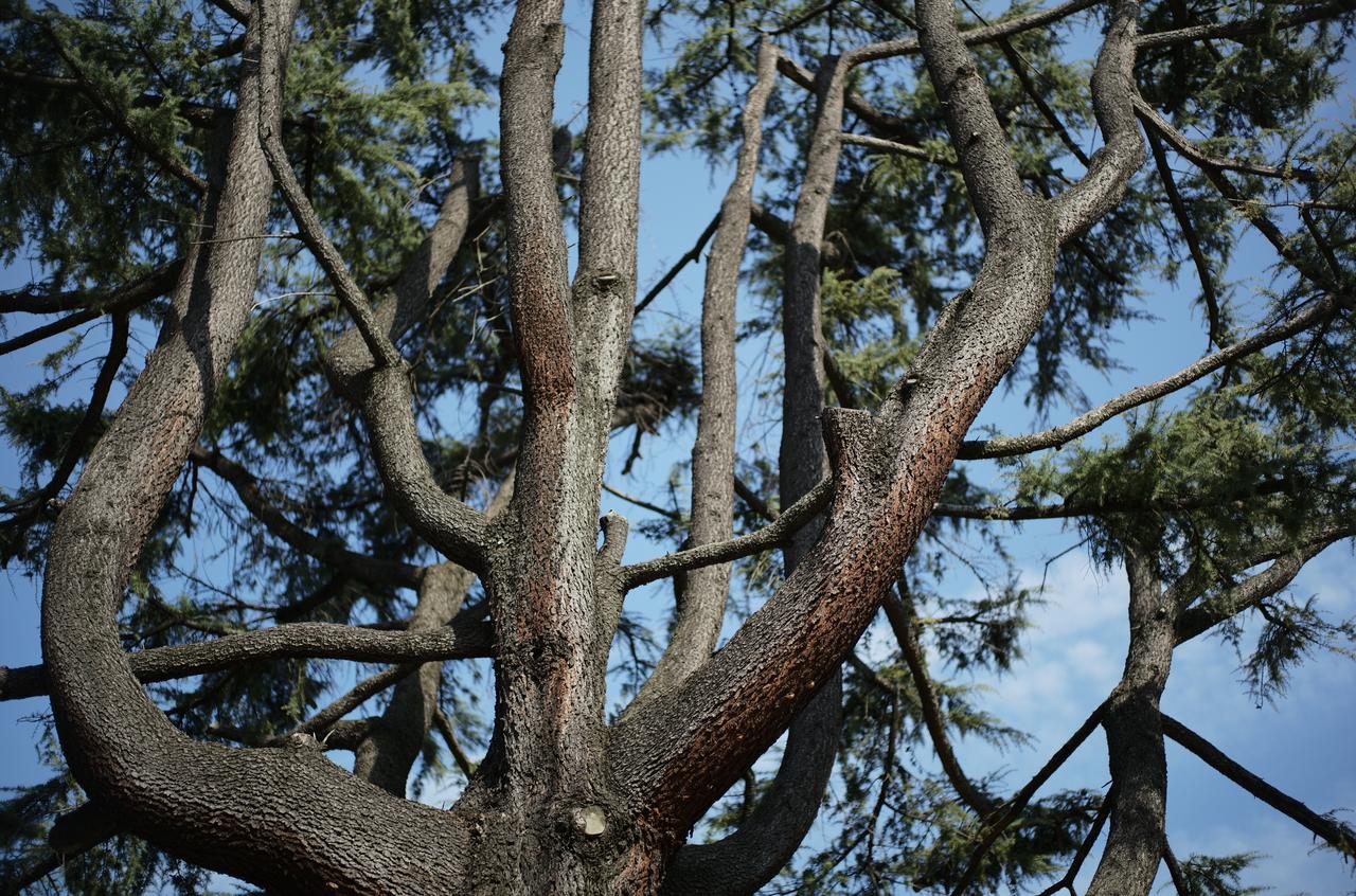 生命力のあふれる樹木