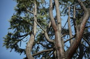 靭公園のりっぱな樹木