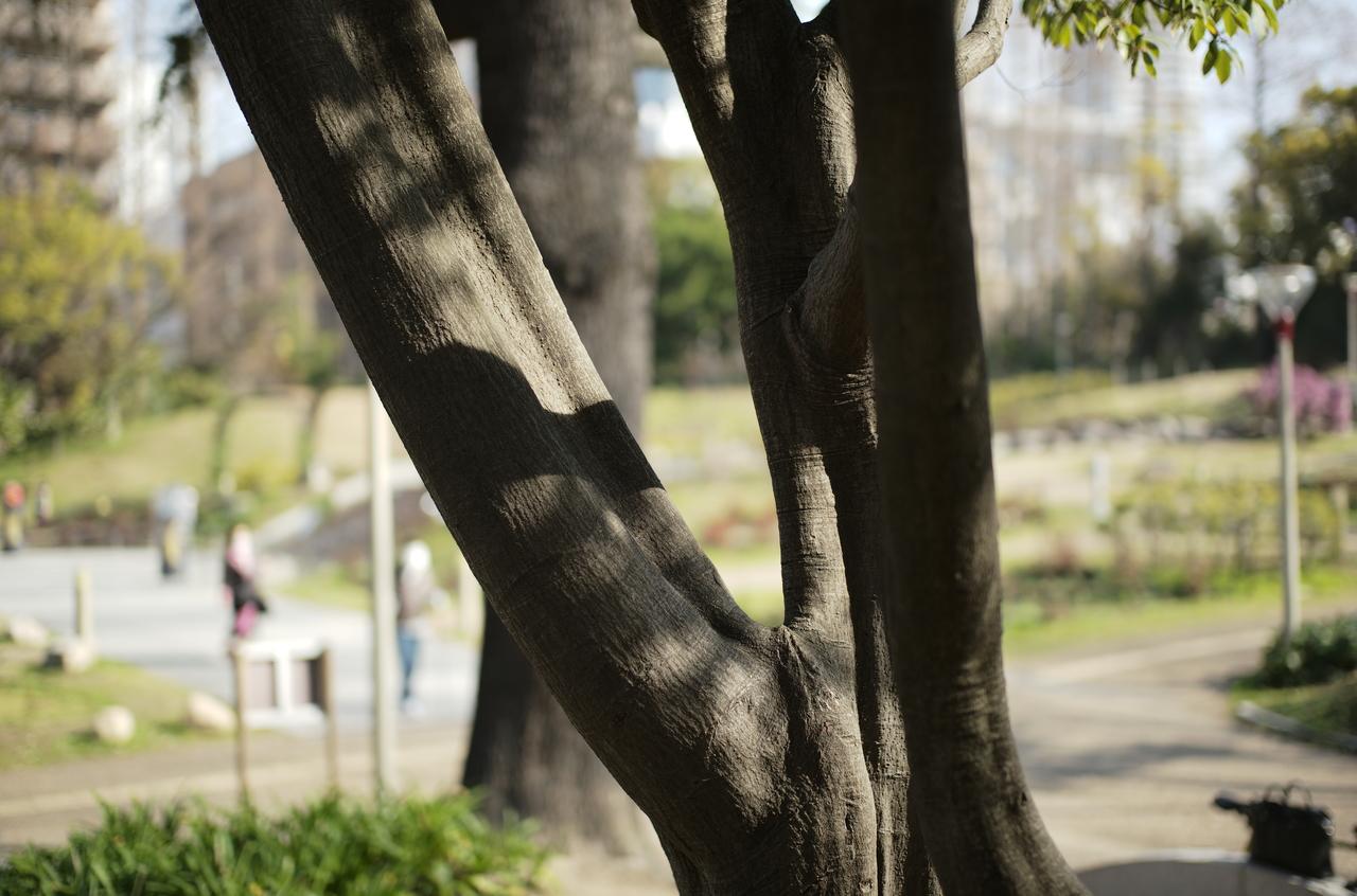 公園で力強く生きる大木