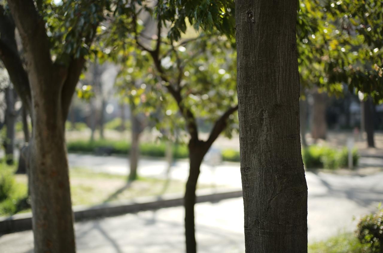 キレイな遠近法で表現された樹木