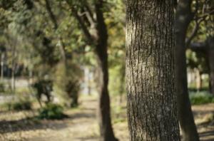 生命力のある大木
