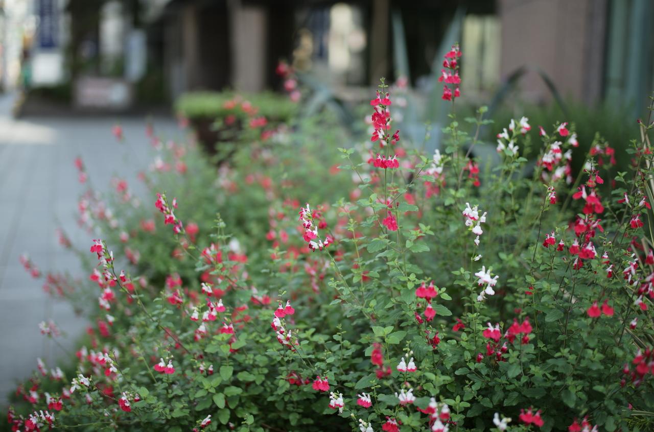すばらしいお花と遠近感