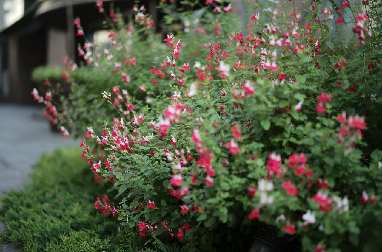 オフィス街で輝く美しい花壇のお花と