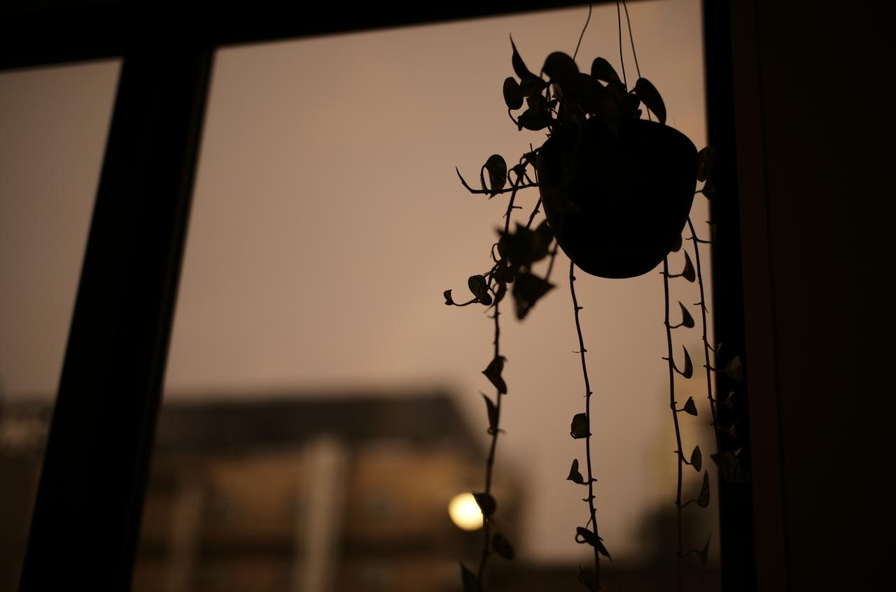 夕焼けとレインボー、観葉植物