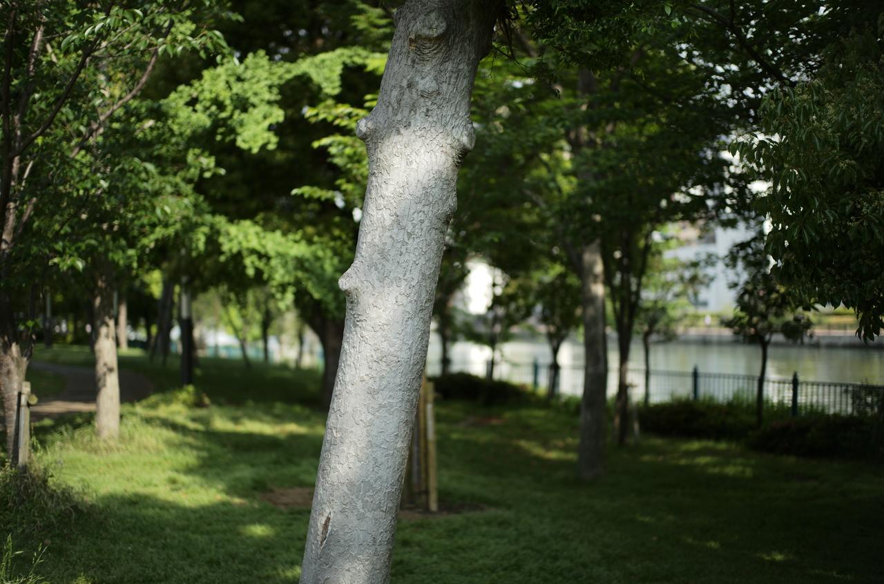 中之島公園の草木と美しい木肌