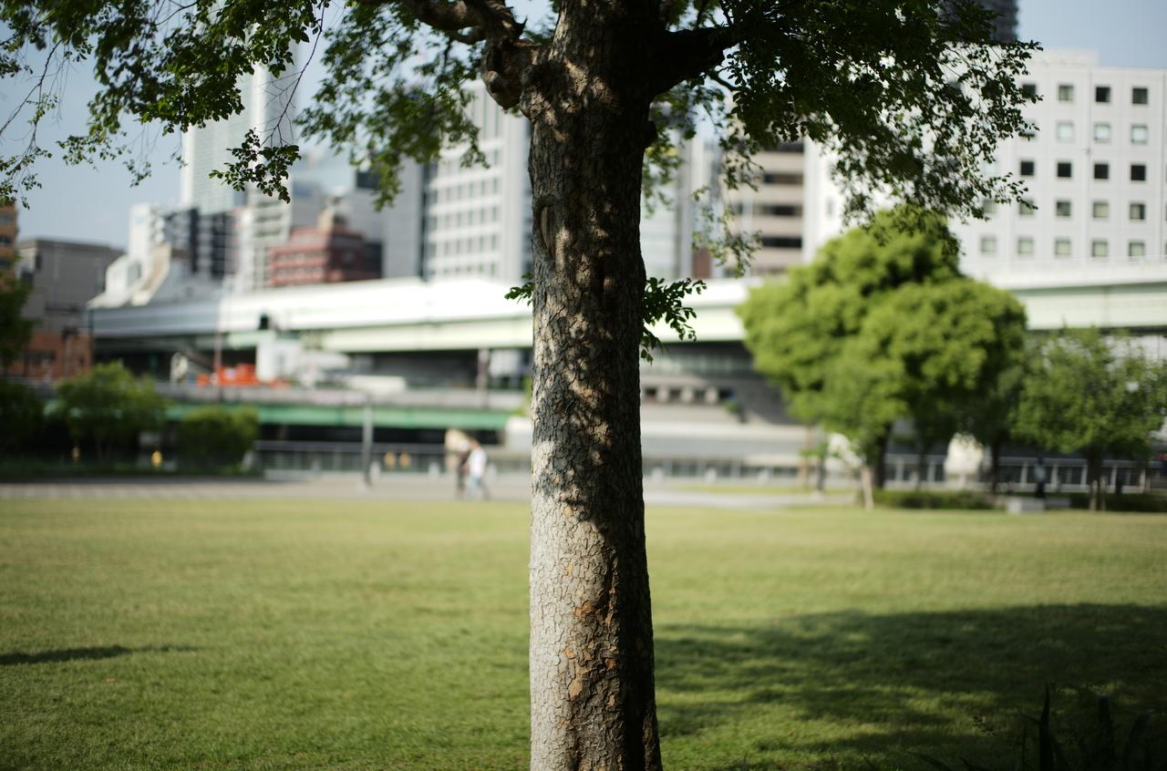中之島公園の美しい樹木