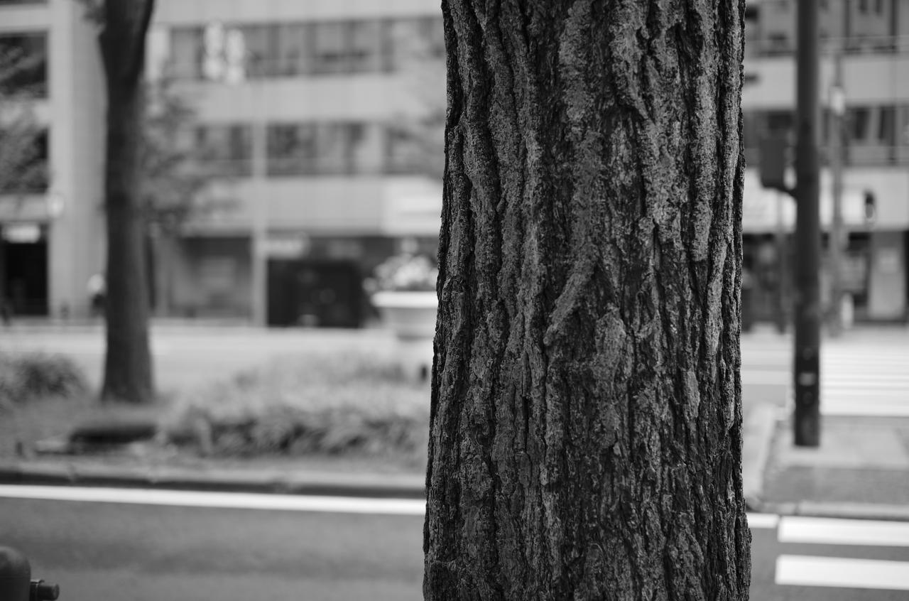 モノクロで撮影した美しい木肌