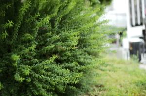 臨場感のある植林
