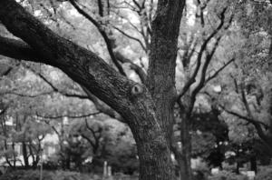 モノクロで撮影したかっこいい木肌