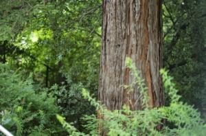 美しい樹木の木肌と緑
