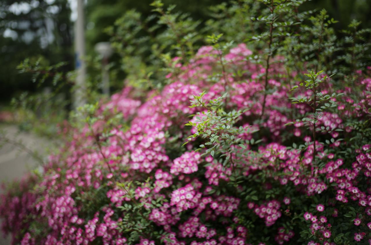 素晴らしいお花畑