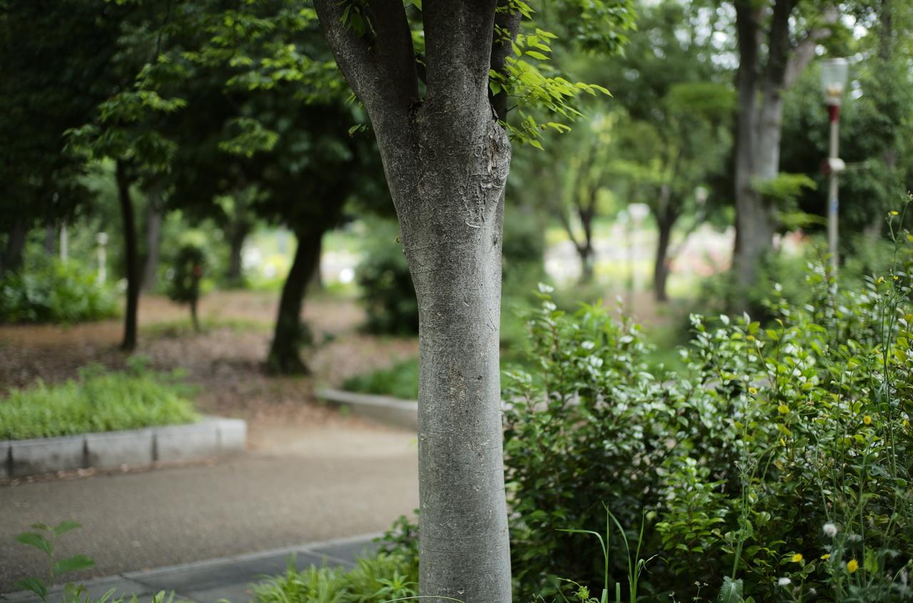 公園で撮影した美しい木肌とボケ写真