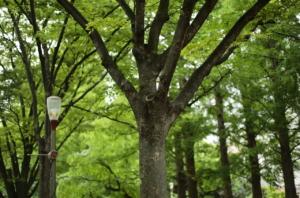 目のさめるほど美しい樹木