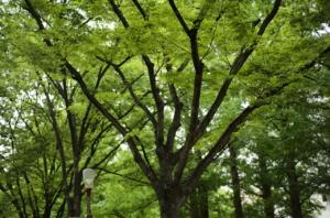 鮮やかなマインドマップのような樹木