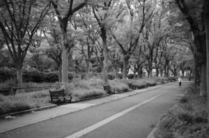 モノクロで撮影した美しい公園の通り
