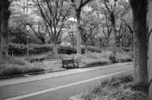 モノクロで撮影した公園の写真