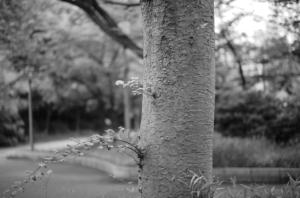 モノクロで撮影した美しい木肌と公園