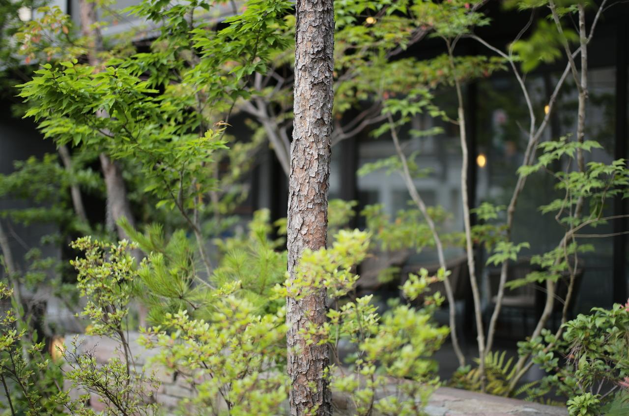 美しい樹木の木肌
