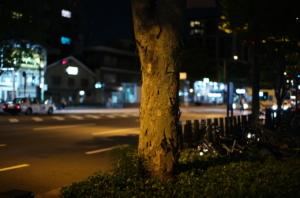 御池通の美しい街路樹