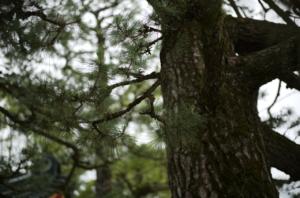 生命力を感じる木肌と苔
